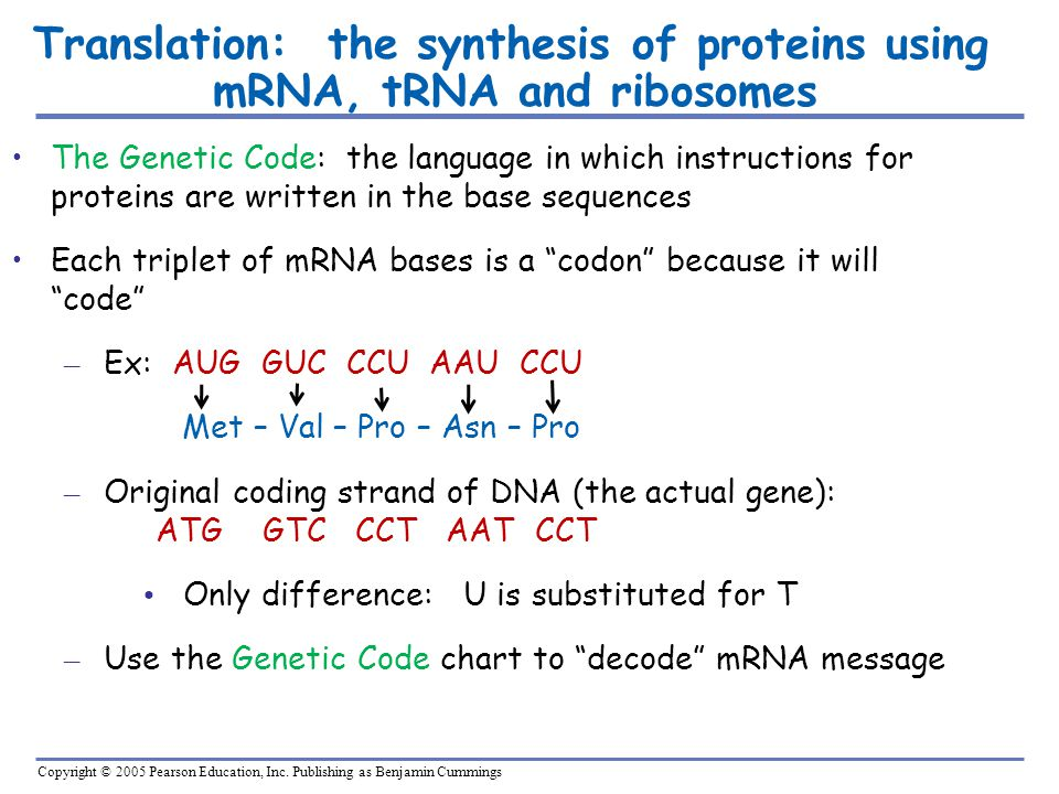 Translation: the synthesis of proteins using mRNA, tRNA and ribosomes
