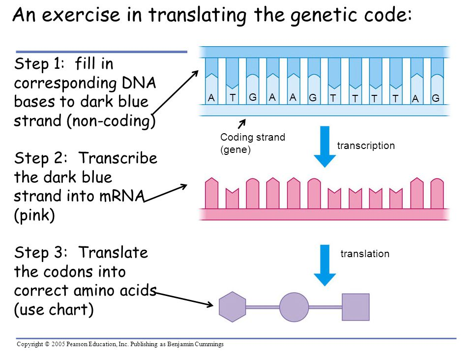 An exercise in translating the genetic code: