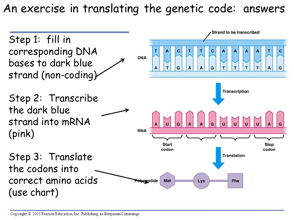 An exercise in translating the genetic code: answers