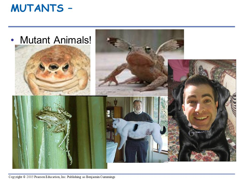 MUTANTS – Mutant Animals!