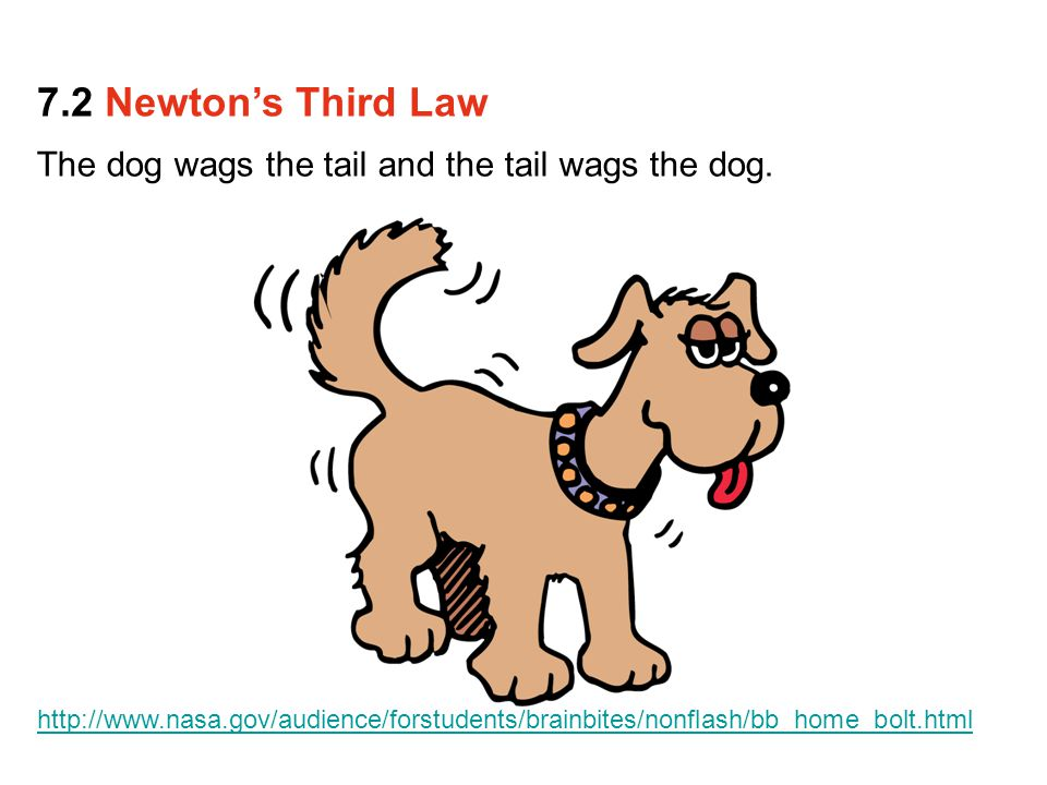 7.2 Newton's Third Law The dog wags the tail and the tail wags the dog.