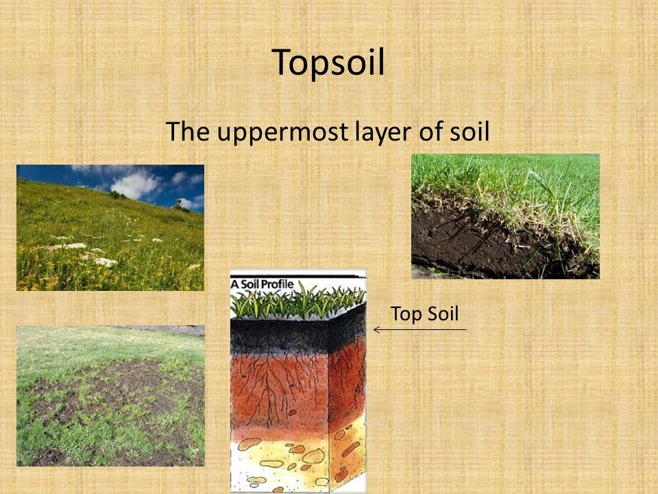 Topsoil The uppermost layer of soil Top Soil