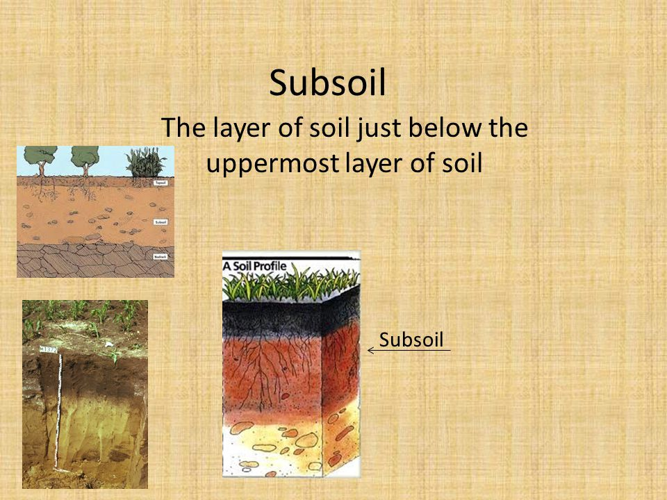 The layer of soil just below the uppermost layer of soil