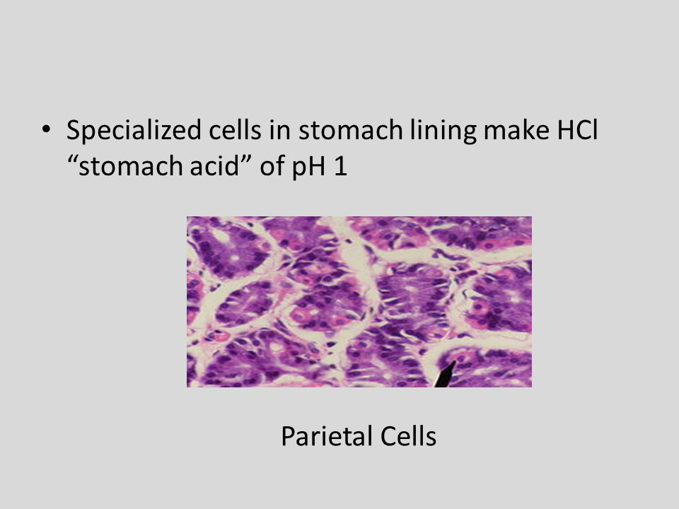 Specialized cells in stomach lining make HCl stomach acid of pH 1