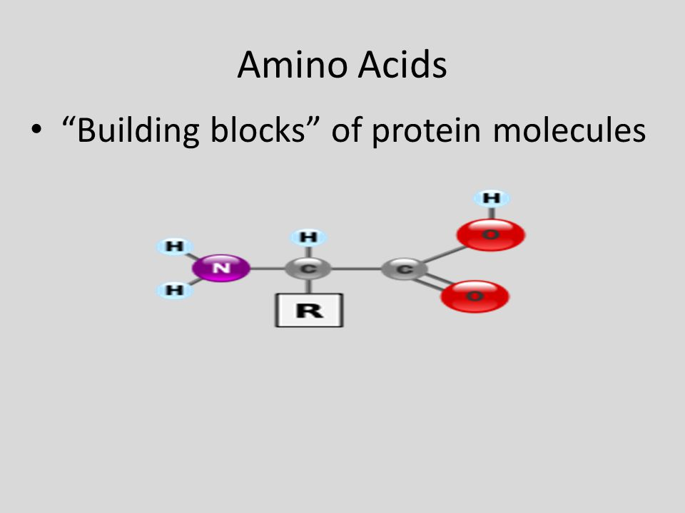 Amino Acids Building blocks of protein molecules