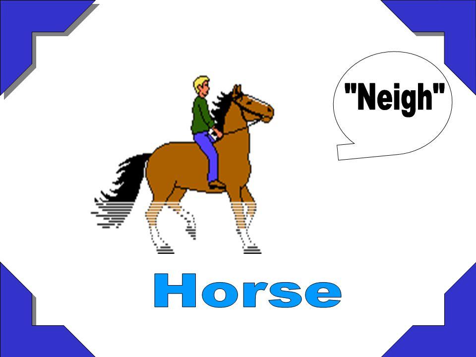 Neigh Horse