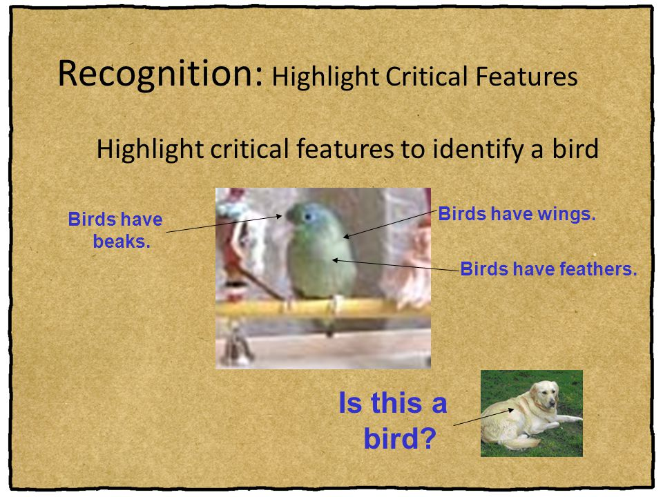 Recognition: Highlight Critical Features