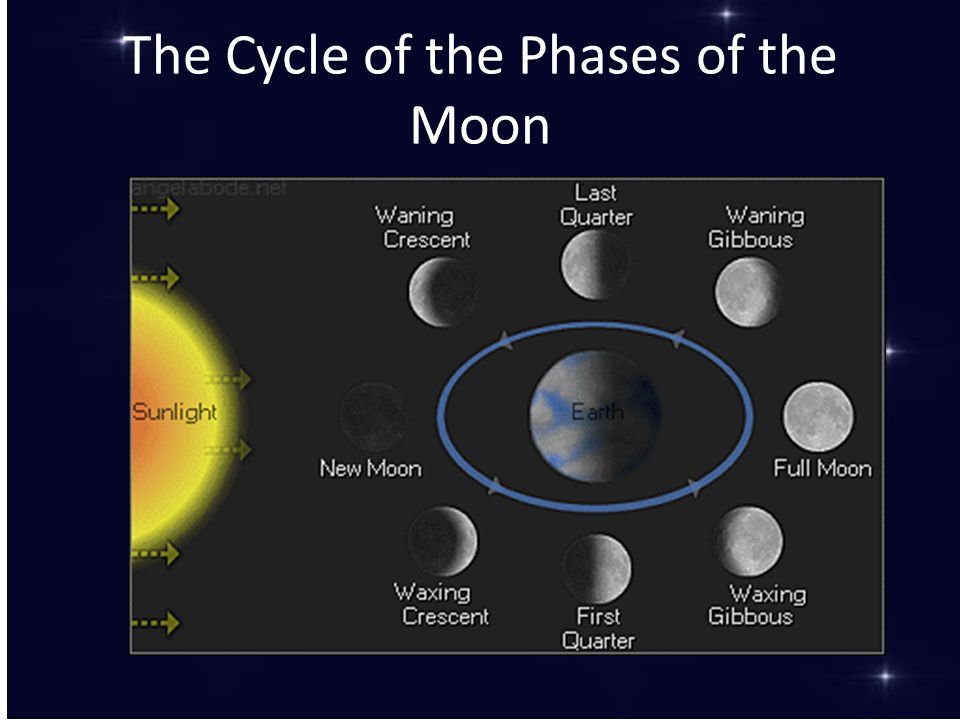 The Cycle of the Phases of the Moon