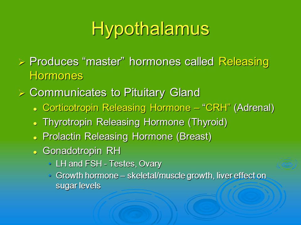 Hypothalamus Produces master hormones called Releasing Hormones