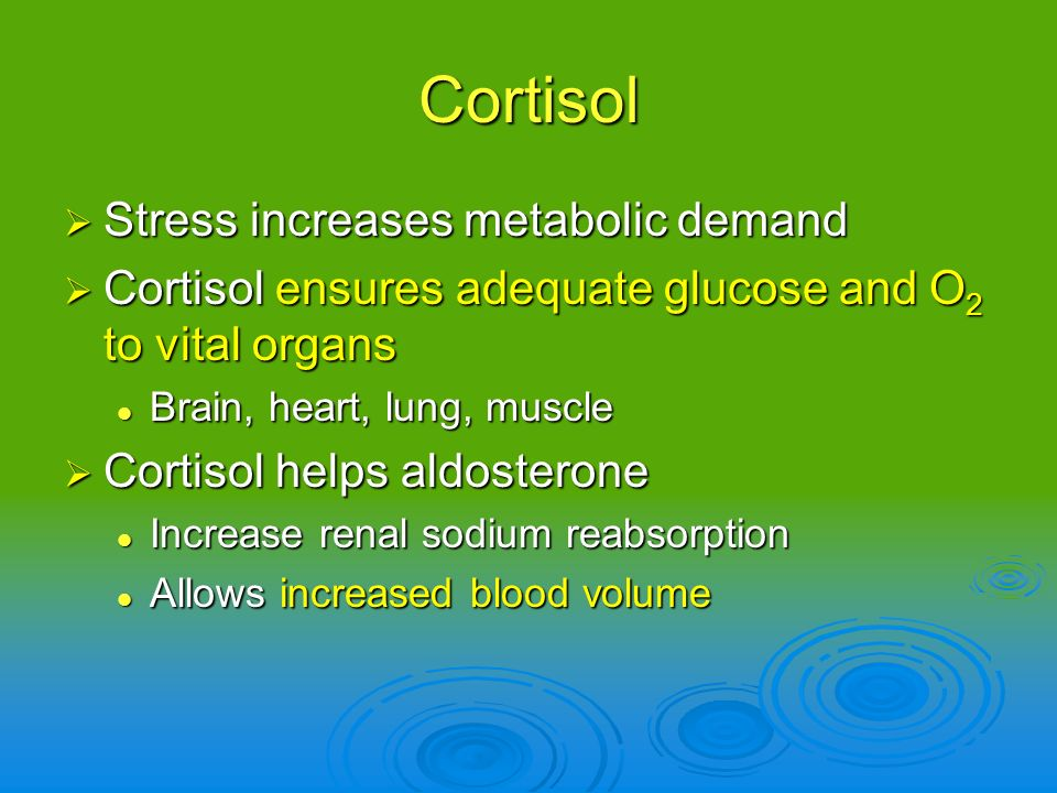 Cortisol Stress increases metabolic demand