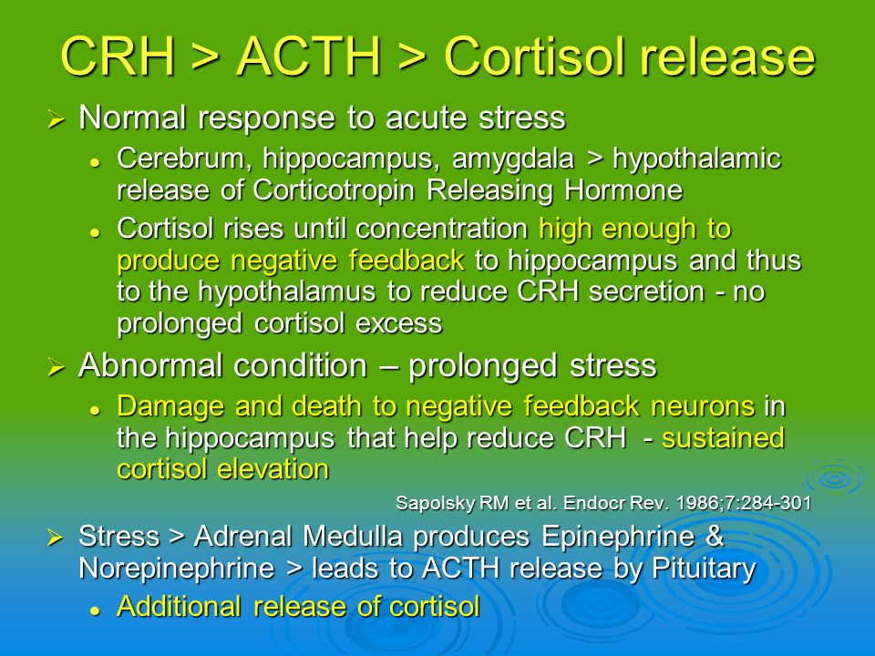 CRH > ACTH > Cortisol release
