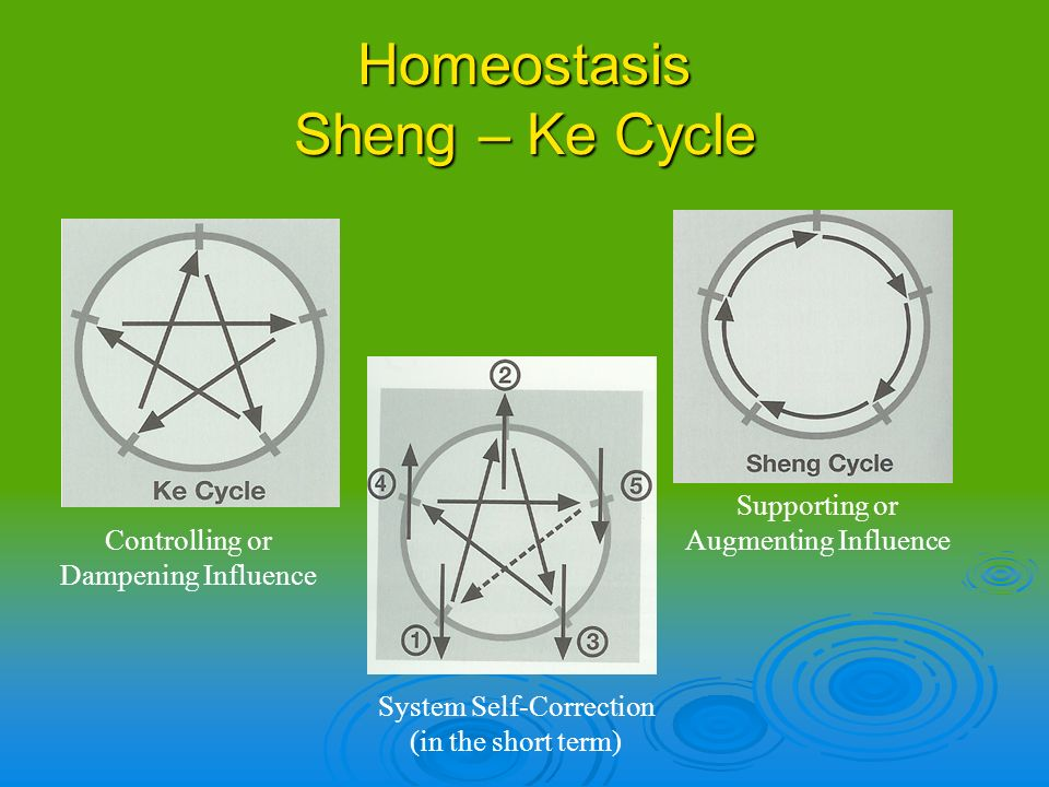 Homeostasis Sheng – Ke Cycle