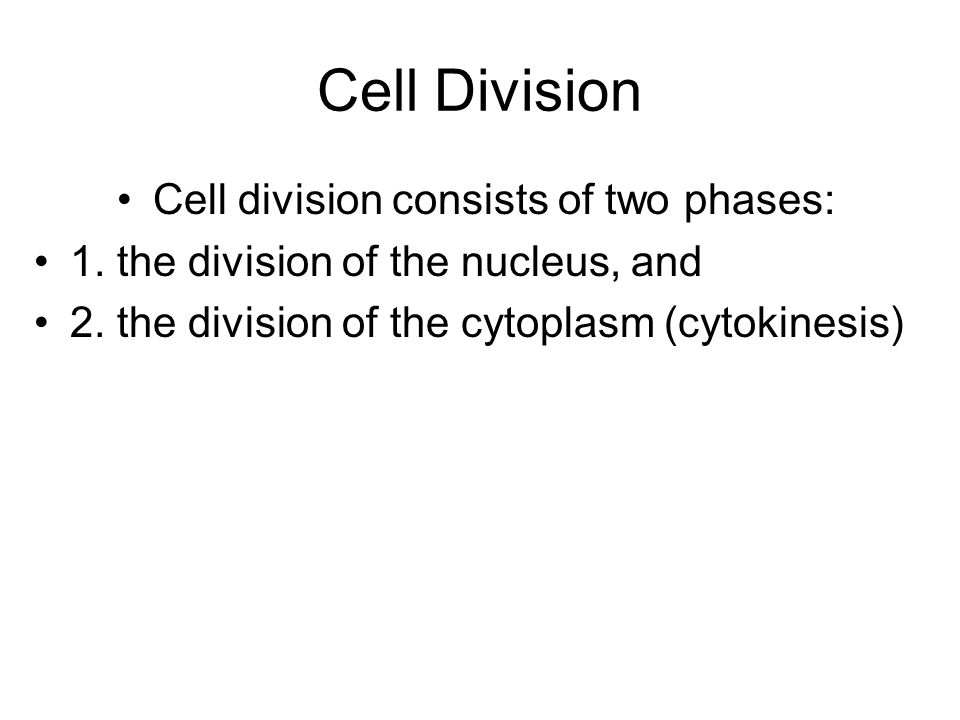 Cell division consists of two phases: