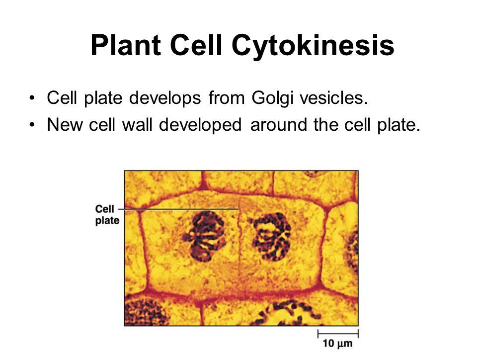 Plant Cell Cytokinesis