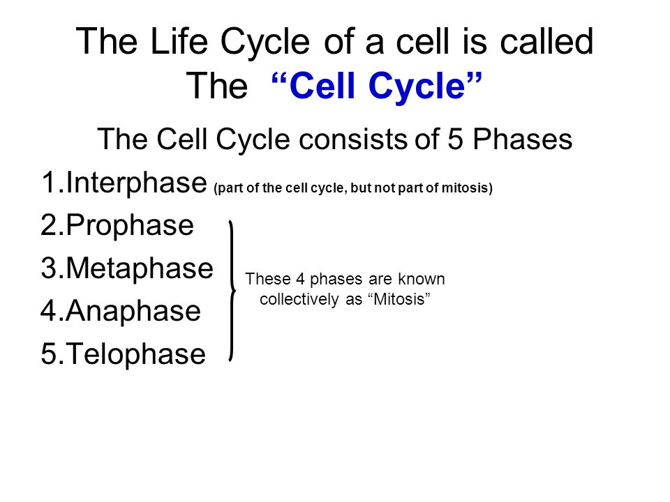 The Life Cycle of a cell is called The Cell Cycle