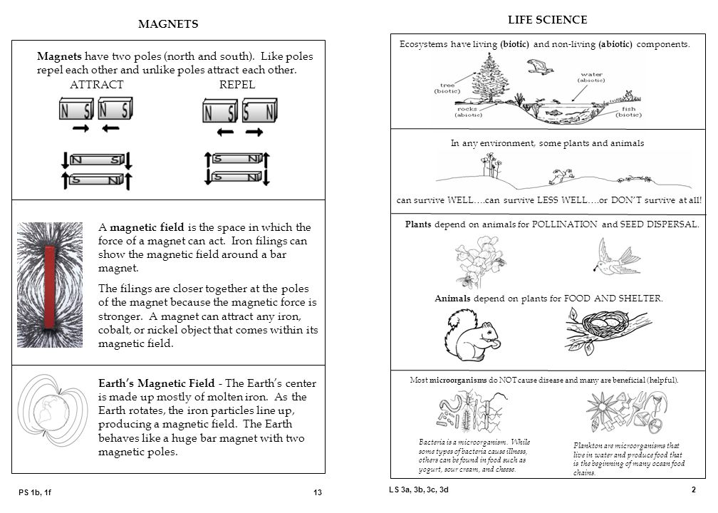 MAGNETS LIFE SCIENCE. Ecosystems have living (biotic) and non-living (abiotic) components.