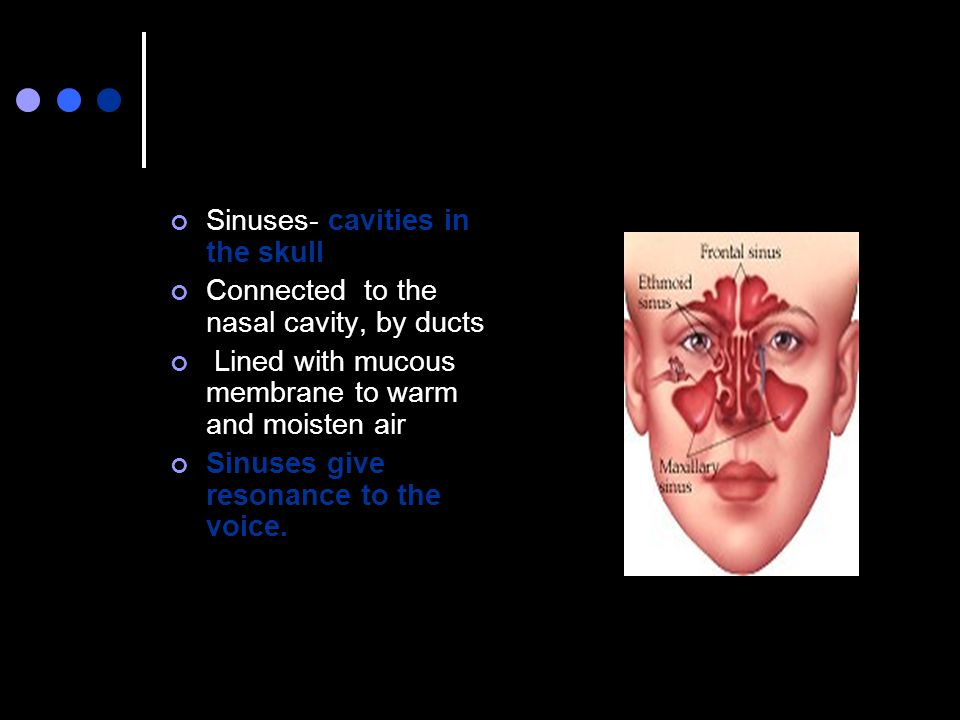Sinuses- cavities in the skull