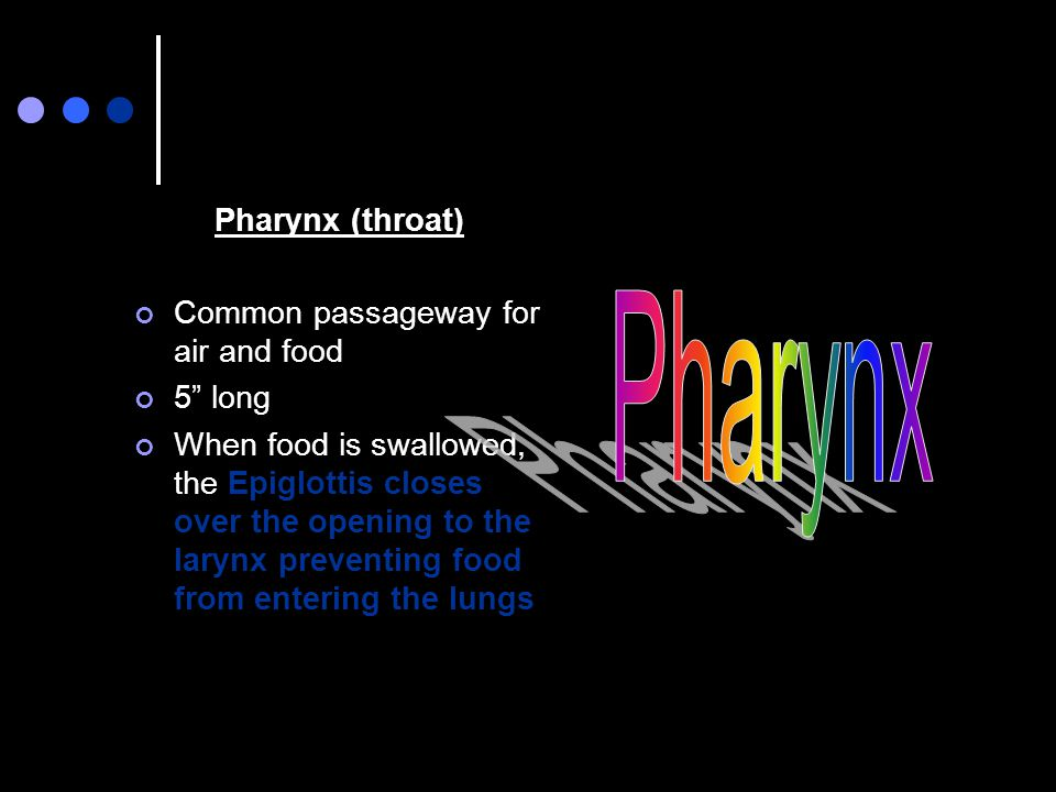 Pharynx Pharynx (throat) Common passageway for air and food 5 long