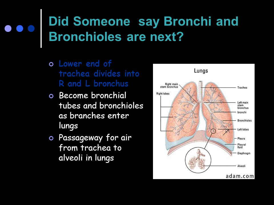 Did Someone say Bronchi and Bronchioles are next