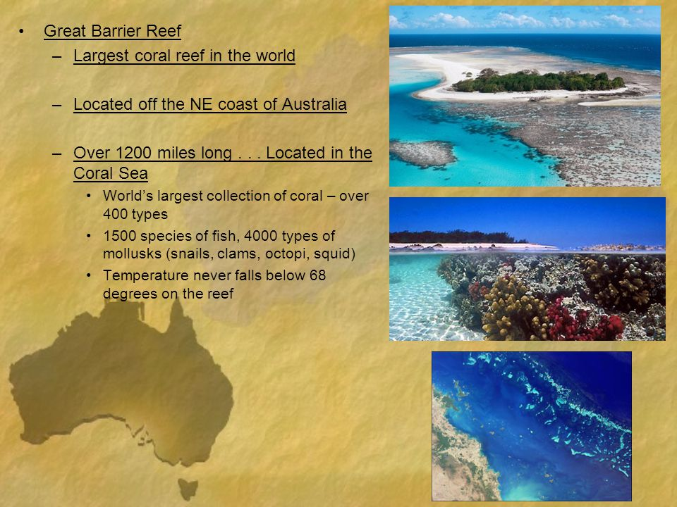 Largest coral reef in the world Located off the NE coast of Australia