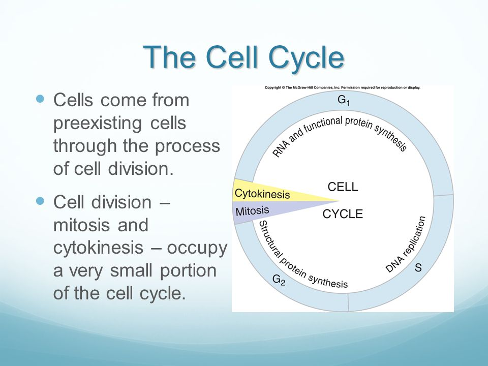 The Cell Cycle Cells come from preexisting cells through the process of cell division.