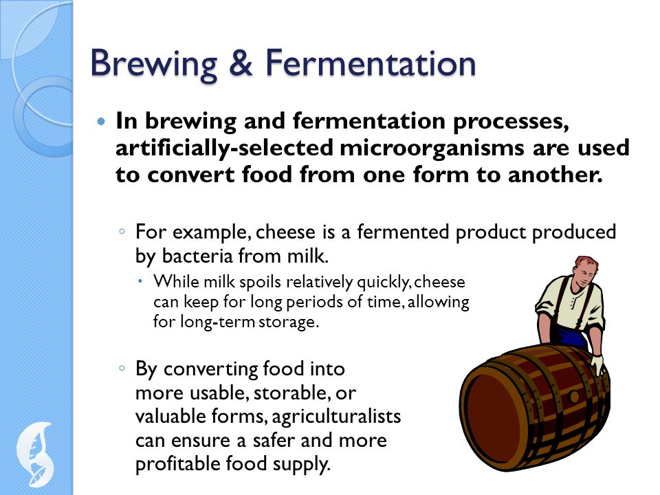Brewing & Fermentation