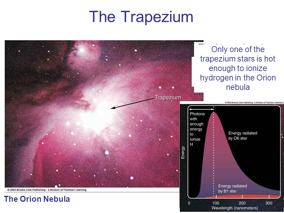 The Trapezium The 4 trapezium stars: Brightest, young stars (< 2 million years old) in the central region of the Orion nebula.
