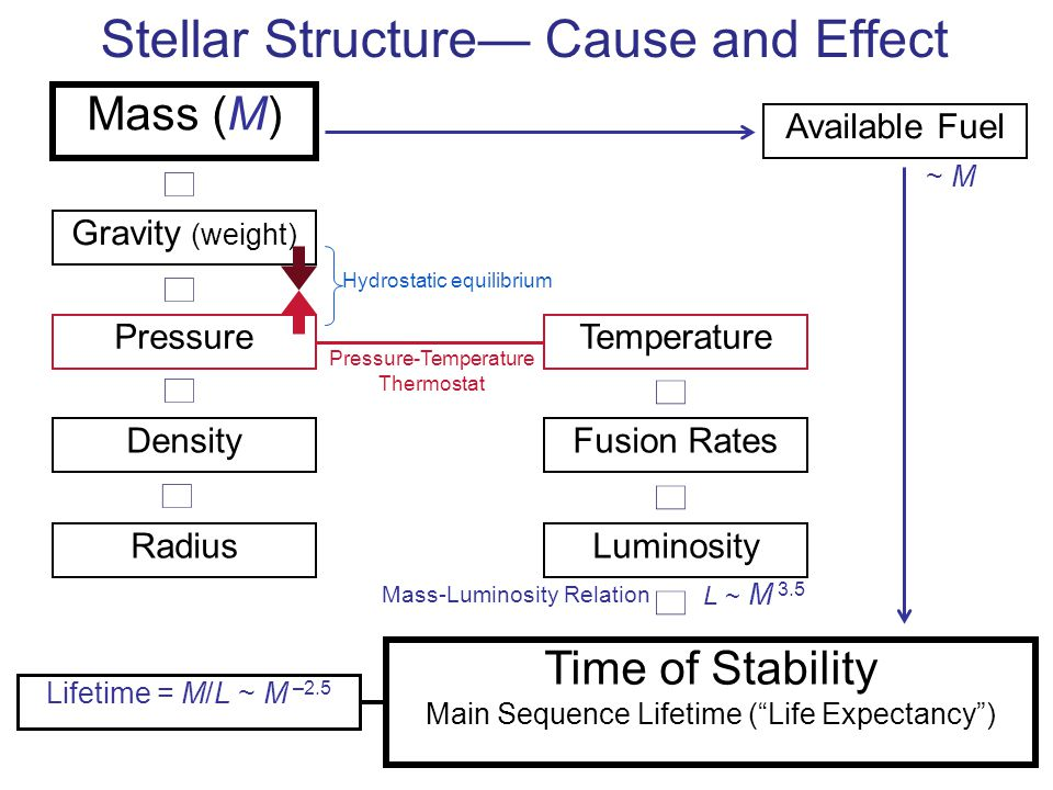Stellar Structure— Cause and Effect