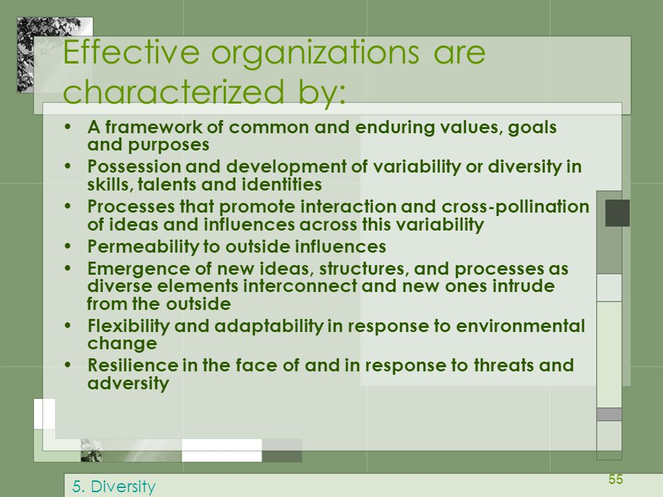 Effective organizations are characterized by: