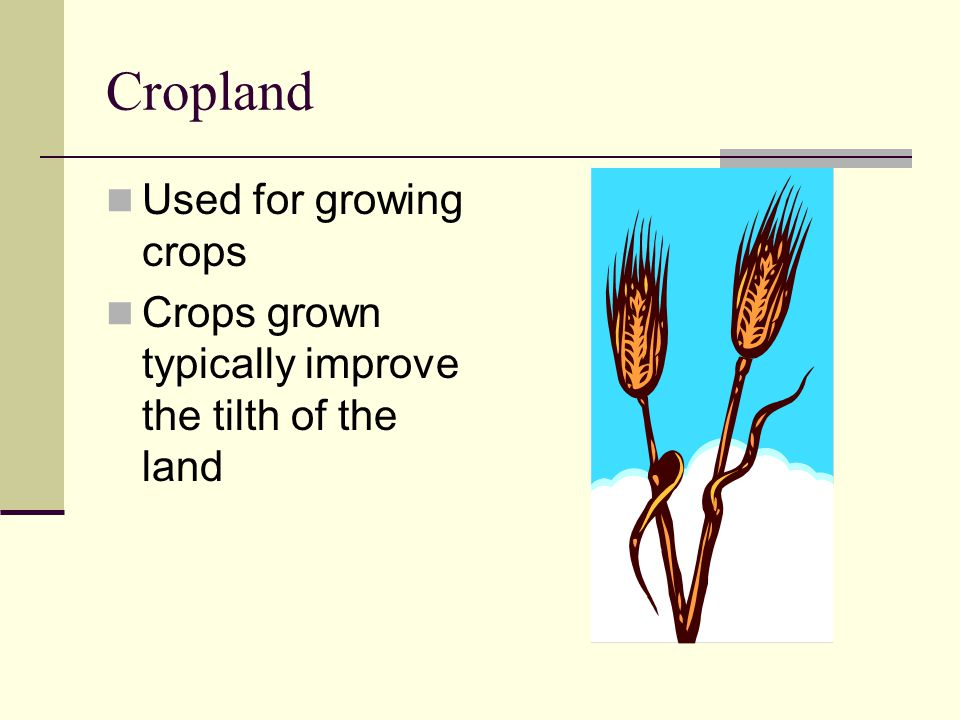 Cropland Used for growing crops