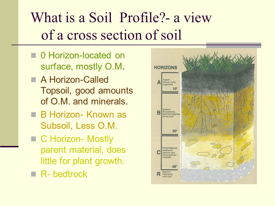 What is a Soil Profile - a view of a cross section of soil