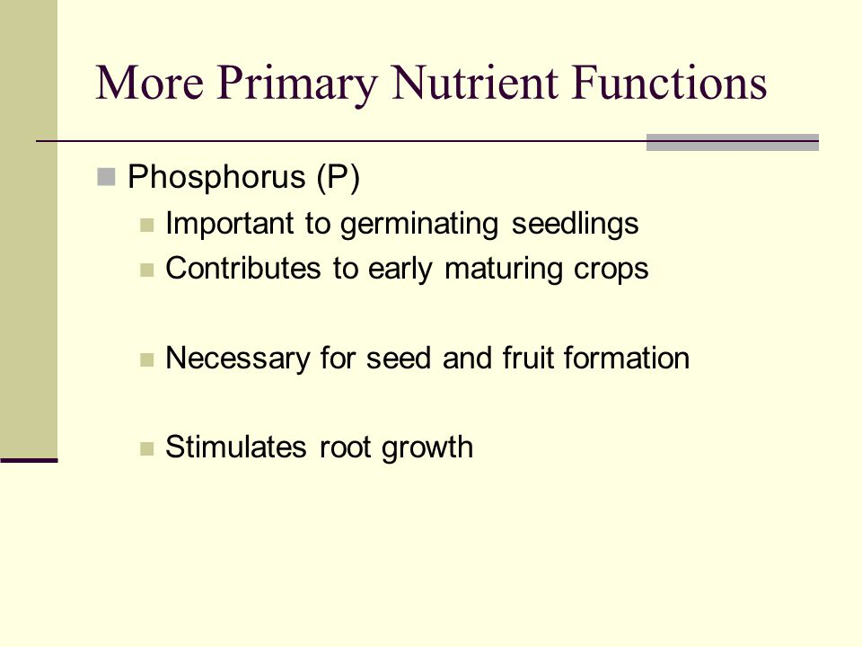 More Primary Nutrient Functions