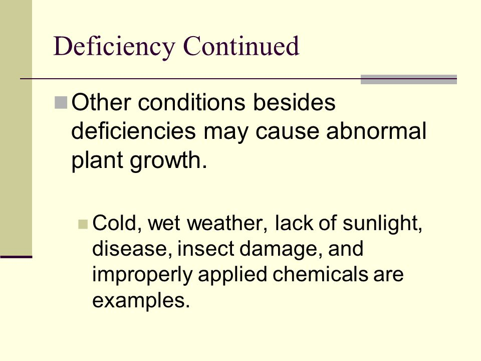 Deficiency Continued Other conditions besides deficiencies may cause abnormal plant growth.