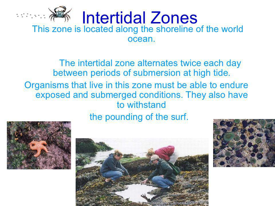 Intertidal ZonesThis zone is located along the shoreline of the world ocean.