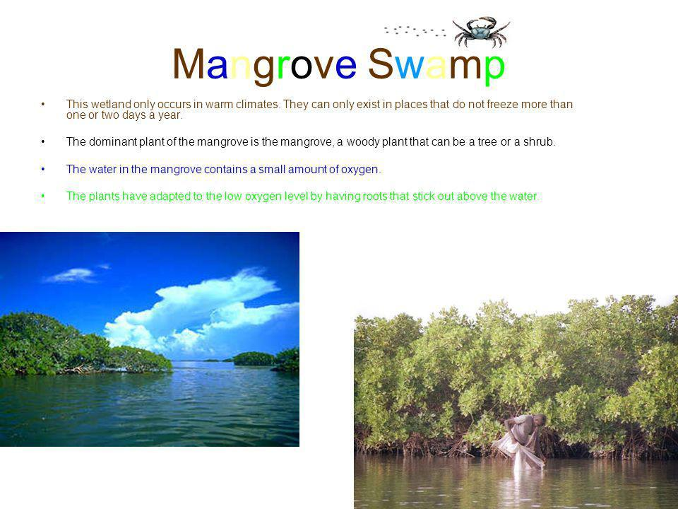 Mangrove Swamp This wetland only occurs in warm climates. They can only exist in places that do not freeze more than one or two days a year.