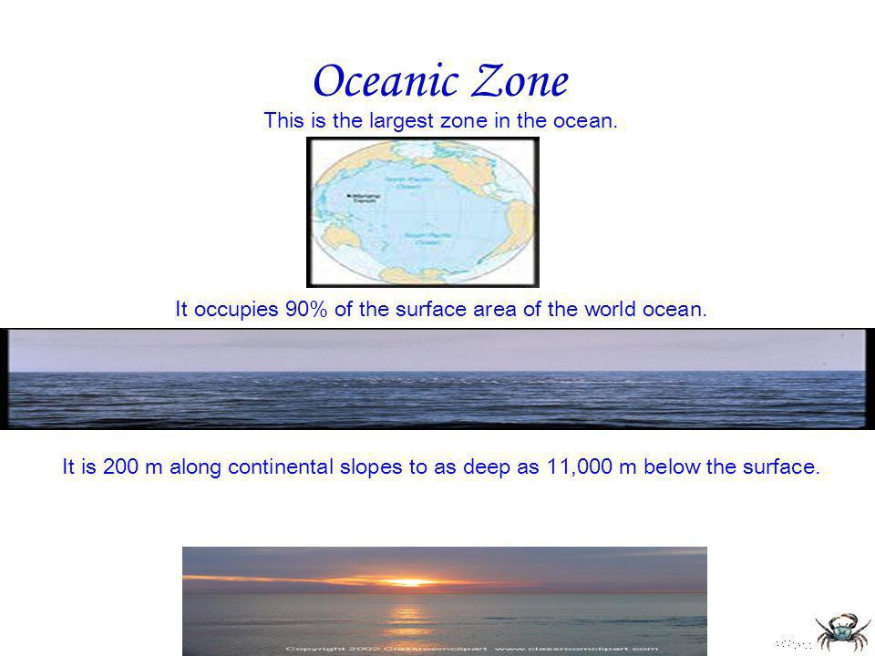 Oceanic Zone This is the largest zone in the ocean. It occupies 90% of the surface area of the world ocean.