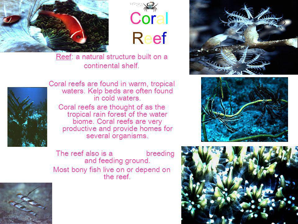 Coral Reef Reef: a natural structure built on a continental shelf.