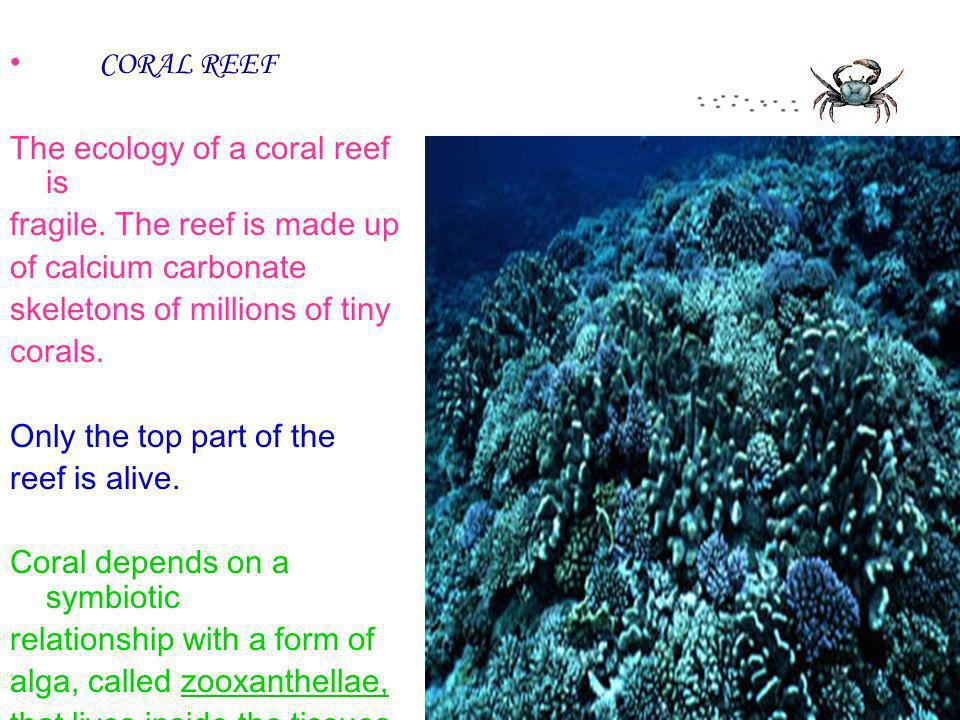 CORAL REEF The ecology of a coral reef is. fragile. The reef is made up. of calcium carbonate. skeletons of millions of tiny.