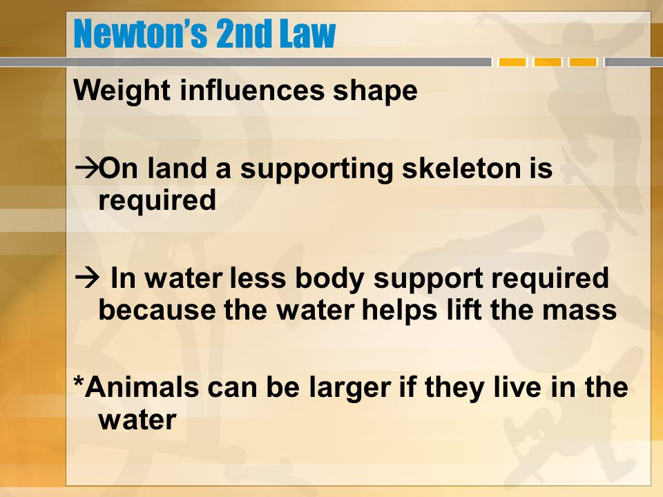 Newton's 2nd Law Weight influences shape