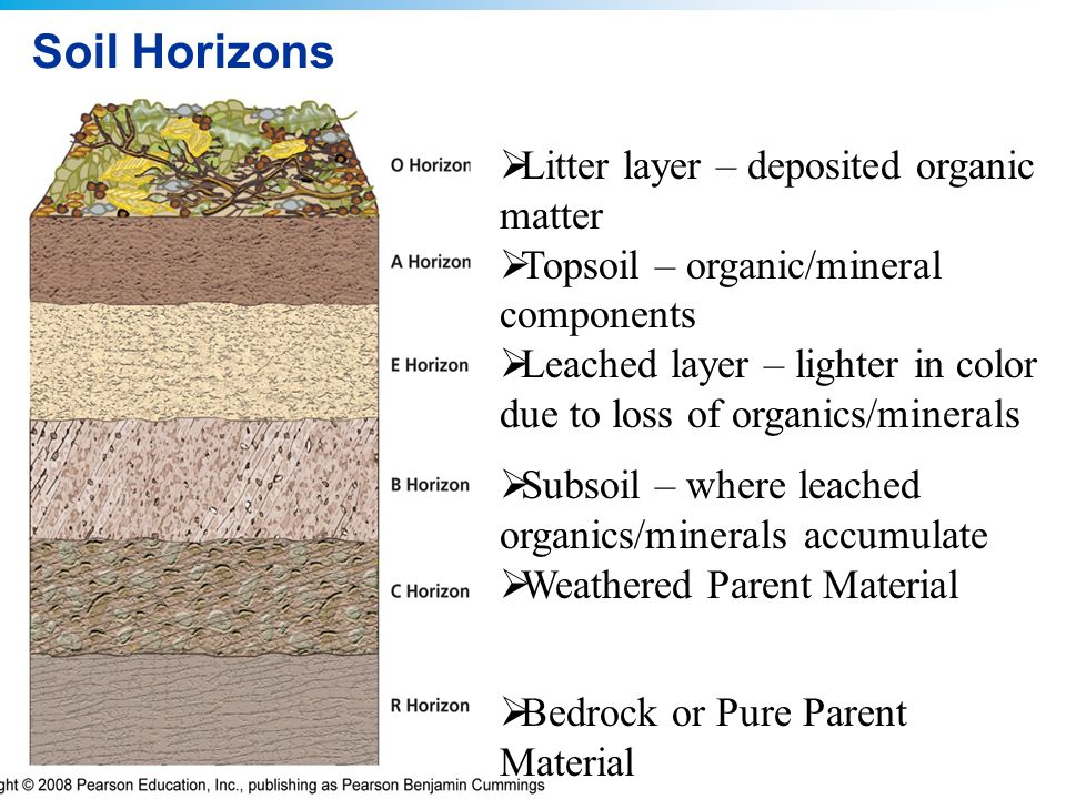 Soil Horizons Litter layer – deposited organic matter