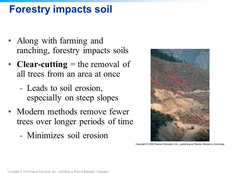 Forestry impacts soil Along with farming and ranching, forestry impacts soils. Clear-cutting = the removal of all trees from an area at once.