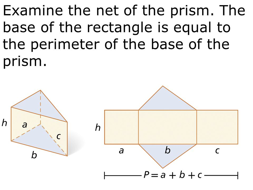 Examine the net of the prism
