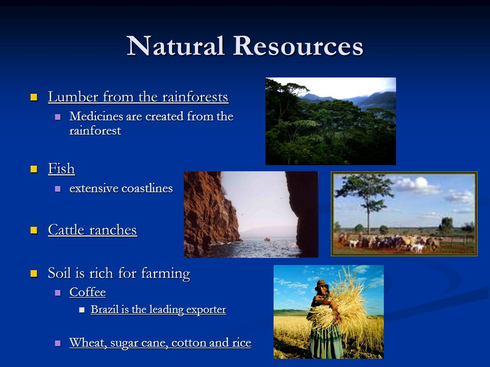 Natural Resources Lumber from the rainforests Fish Cattle ranches