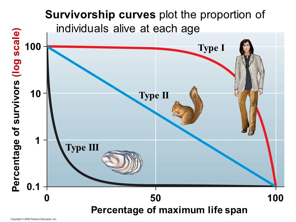 Survivorship curves plot the proportion of individuals alive at each age