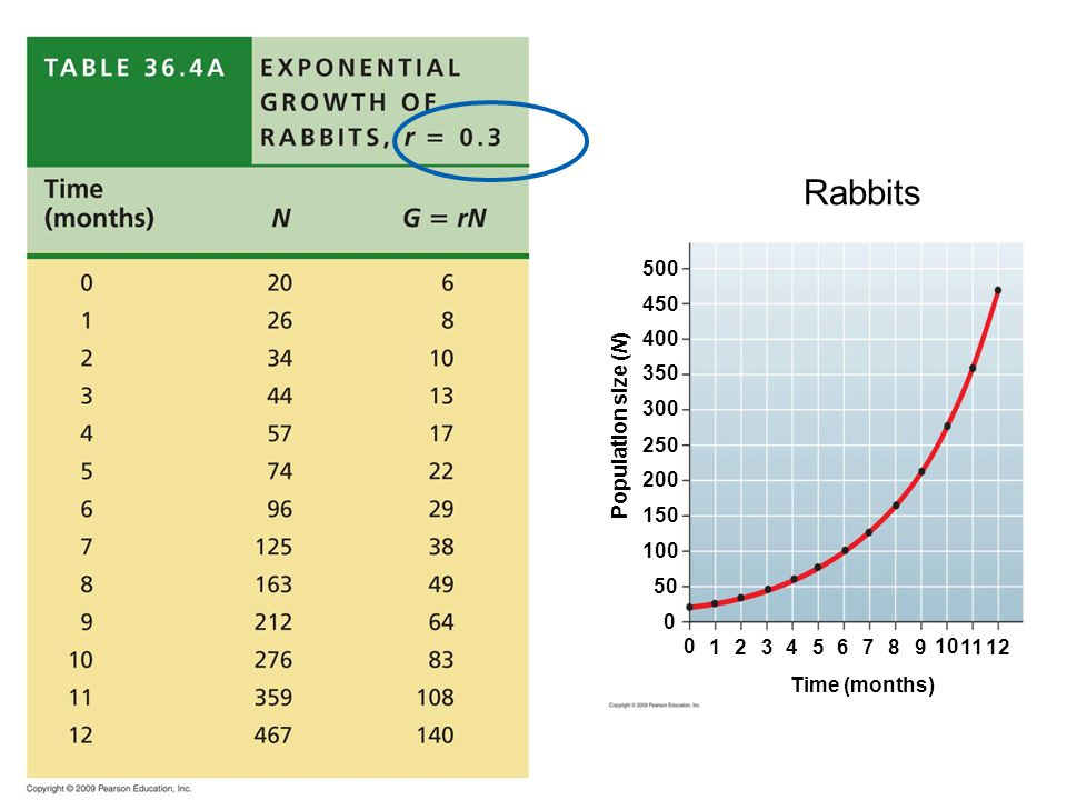Rabbits Time (months) Population size (N) 1 2 3 4 5 6 7 8 9 10 11 12