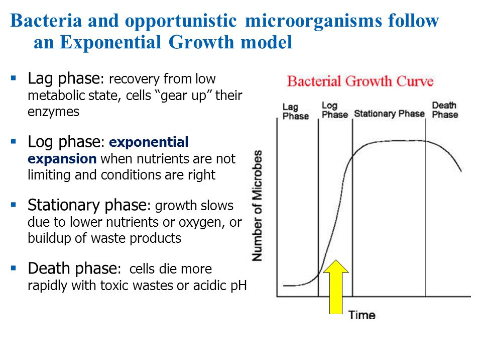 Bacteria and opportunistic microorganisms follow an Exponential Growth model