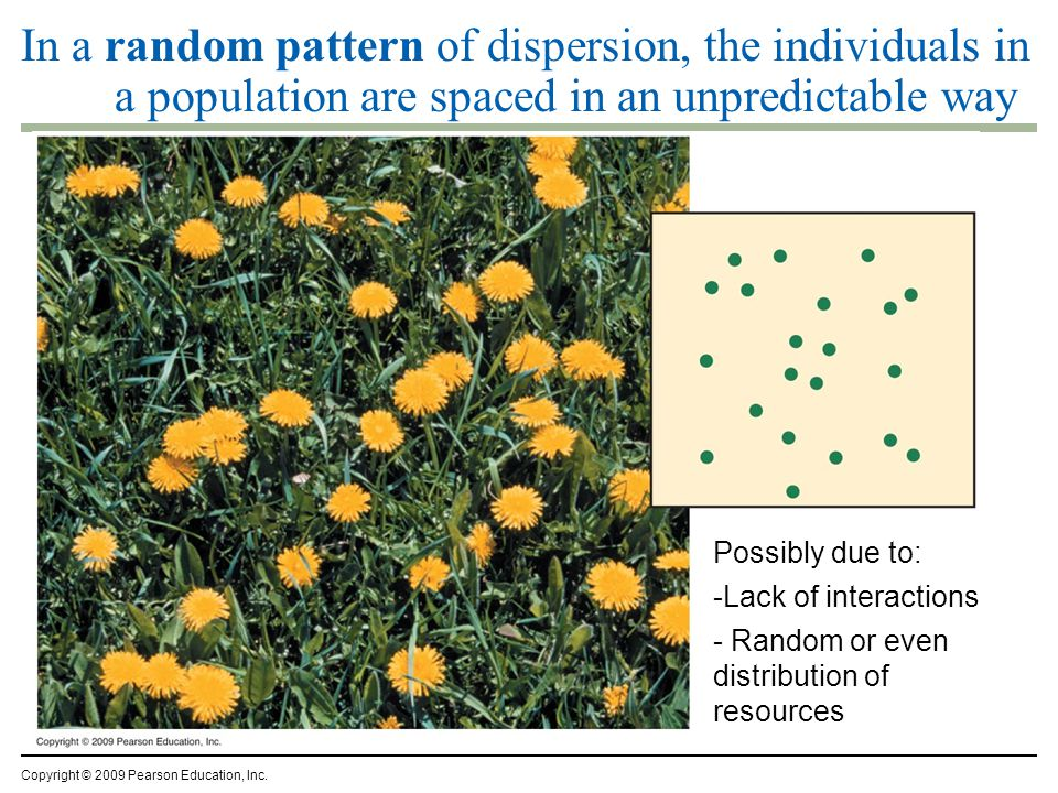In a random pattern of dispersion, the individuals in a population are spaced in an unpredictable way