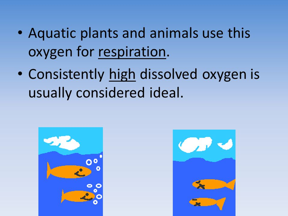 Aquatic plants and animals use this oxygen for respiration.