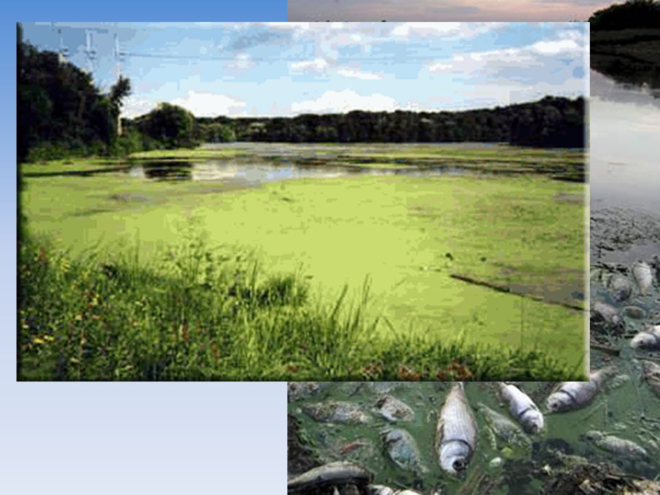 Bacteria in water can consume oxygen as organic matter decays.