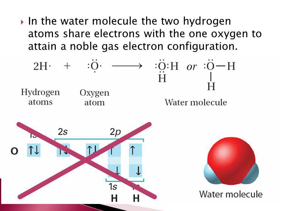 In the water molecule the two hydrogen atoms share electrons with the one oxygen to attain a noble gas electron configuration.